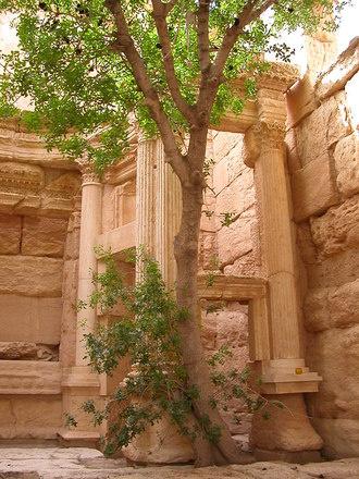 Когда-то Пальмира называлась Тудмором или «городом пальм»