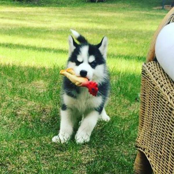 Теперь в семье Басты появился прелестный пес