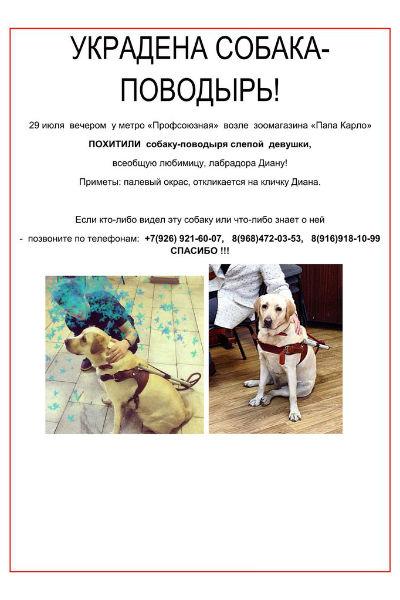 После известия о краже собаки  руководитель управления  взаимодействия со СМИ Владимир  Маркин через Twitter пообещал,  что поможет найти лабрадора