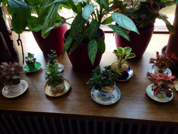Цветы растут в старинных чашках