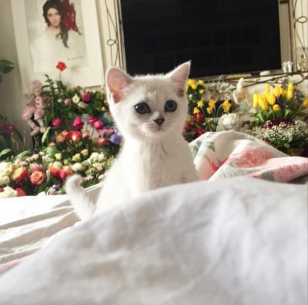 Котик Анастасии Макеевой