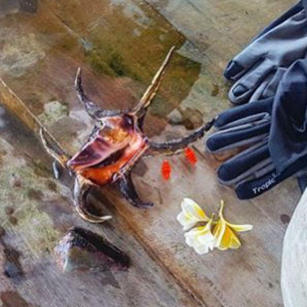 Дотрагиваться до ядовитых существ можно только в перчатках