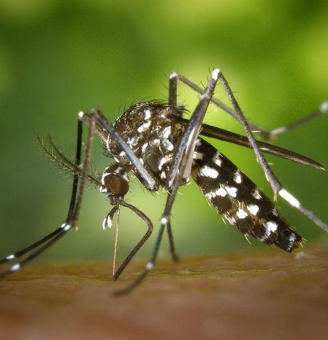 5 способов защититься от назойливых насекомых