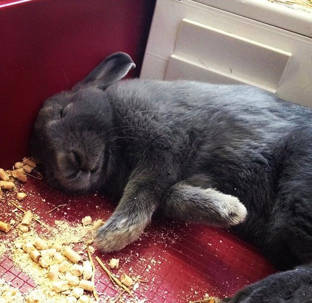 Любимые занятия нашего кролика - поесть и поспать