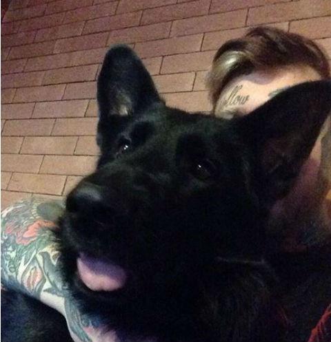 Любимый пес Дениса