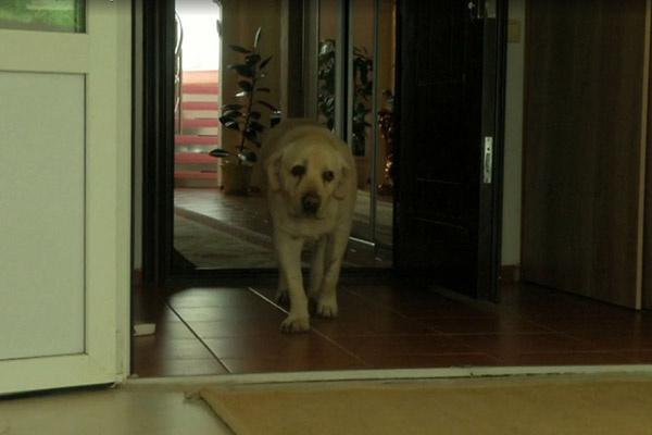 У любимого пса Жанны Фриске тоже онкология
