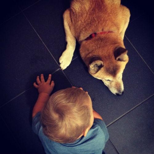 Муза и собака породы шиба-ину по кличке Йоши - лучшие друзья
