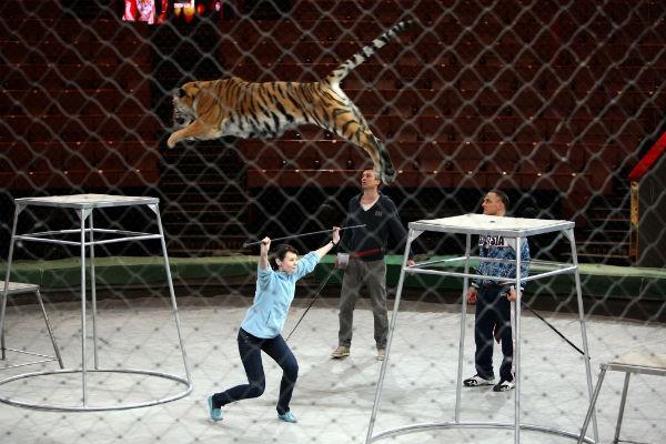 Исполнилась мечта Ольги поработать с тиграми