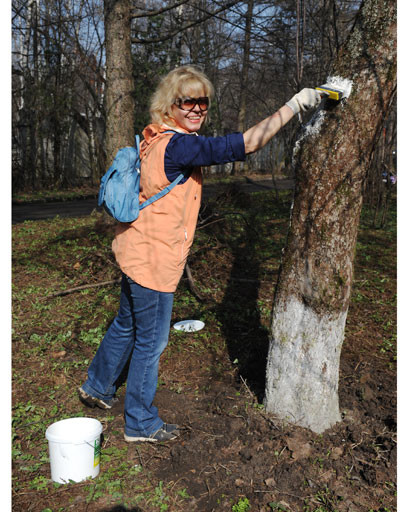 Редакция журнала StarHit спасла деревья от ожогов и вредителей