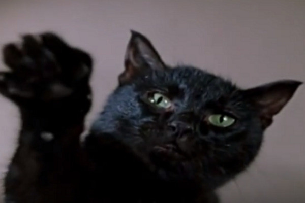 «Чао!». Гайдай обожал снимать черных кошек