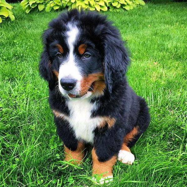 У Александра Буйнова появился щенок