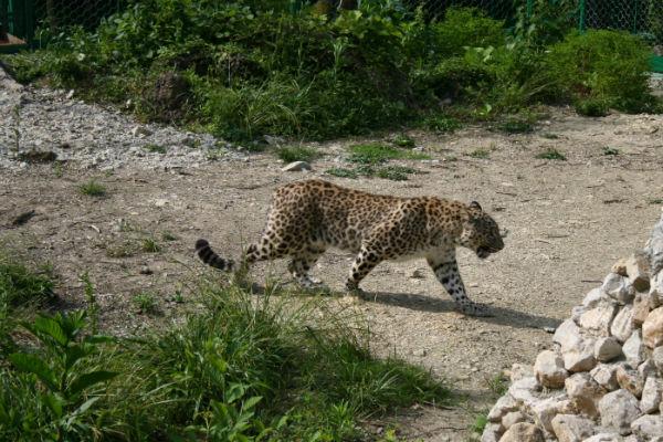 Владимир Владимирович навещал животных на новом месте