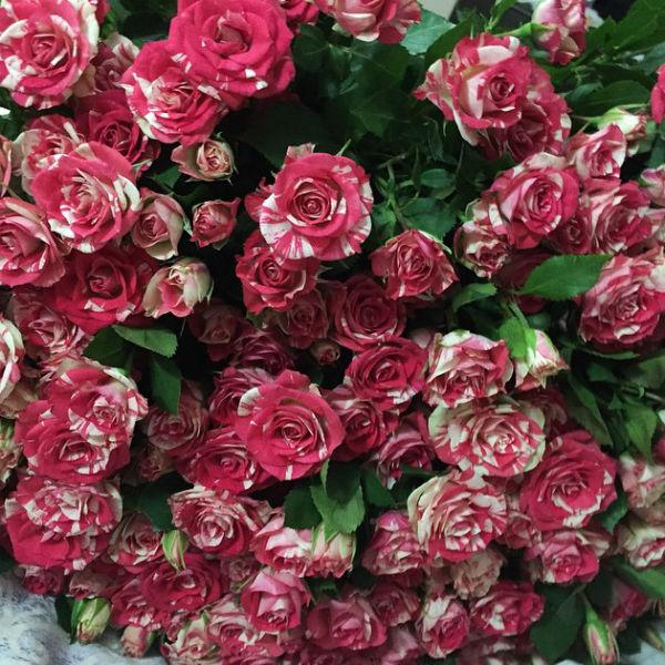 Гарик Харламов дарит жене ее любимые цветы