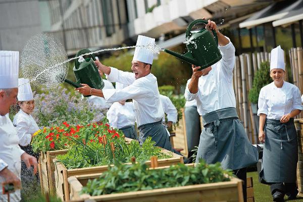 В Kempinski есть все – даже собственный огород и ульи на крыше