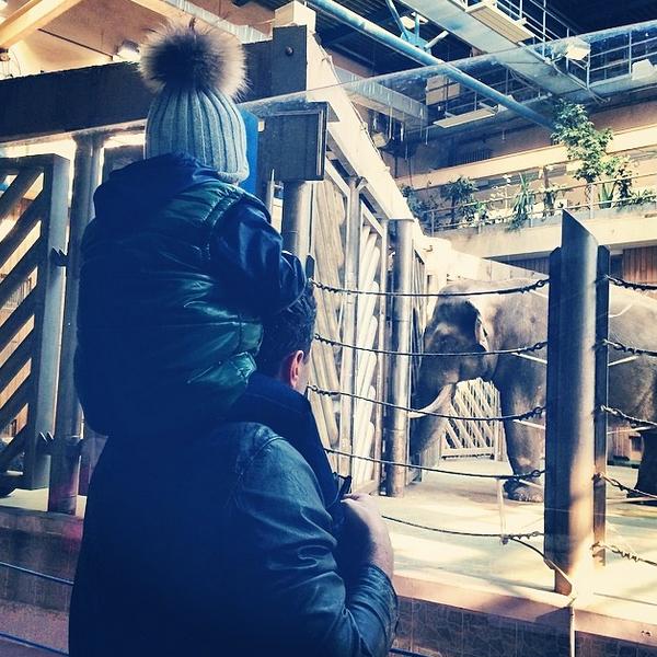 Сын Анфисы Чеховой познакомился со слоном