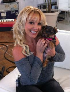 Надеемся, что Бритни переключится на щенка и забудет о ногтях