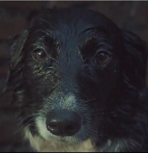 Акция поможет многим бездомным животным