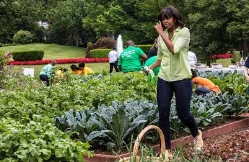 Мишель Обама на огороде