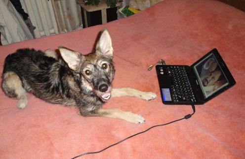 Собака Стася получила кличку  в честь ее любимого исполнителя. Хотя сначала была Умкой