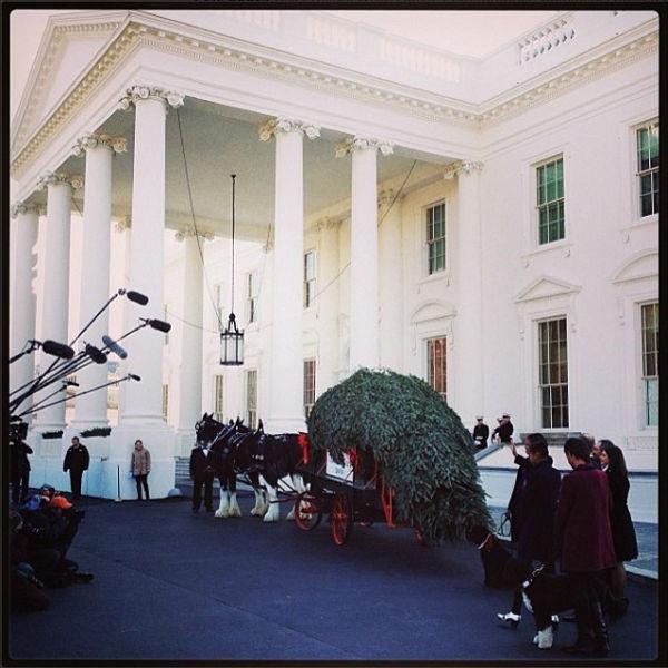 Главная елка прибыла в Белый дом