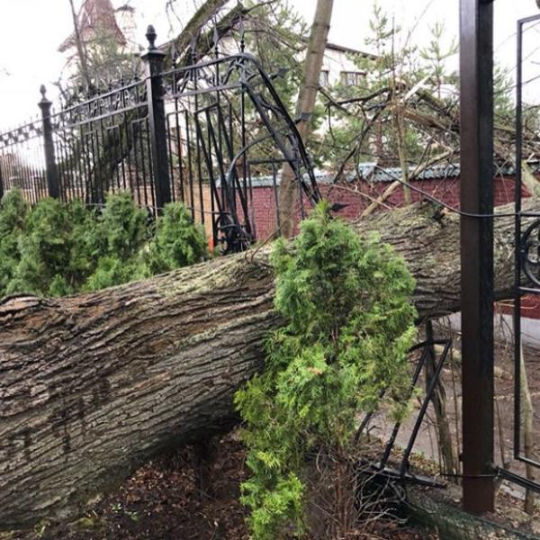 Дерево обрушилось на забор