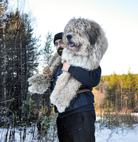 Несмотря на свои внушительные размеры, Вальтер очень добродушный пес