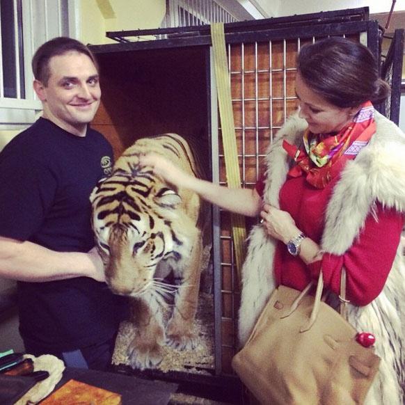 Тигр Мартин позволил Ольге Кабо себя погладить