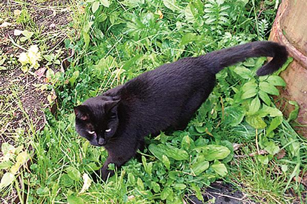 Кот Кыся до сих пор зовет хозяев