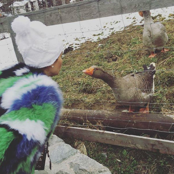 Тина Канделаки задумалась о собственном хозяйстве