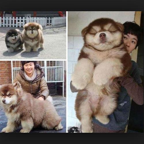 Новости: Павел Воля хочет купить необычную собаку – фото №2