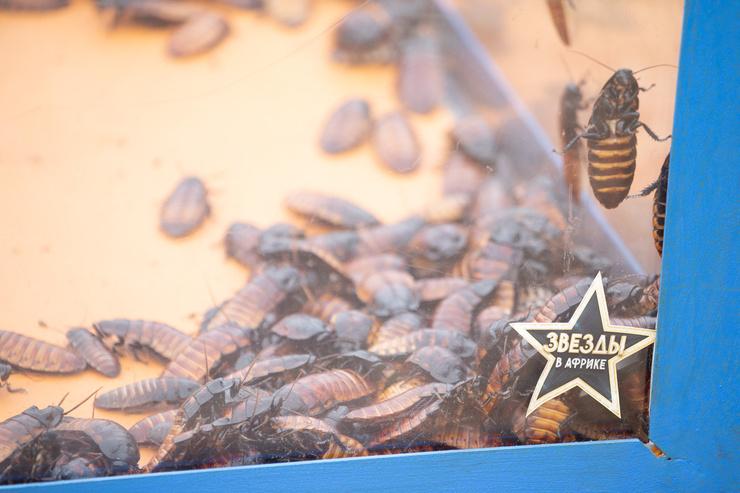 В одной из заданий звездам пришлось погружать лицо в коробы с огромными тараканами