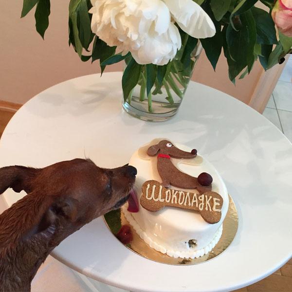 Собака Лены Летучей пробует торт от Сергея Лазарева