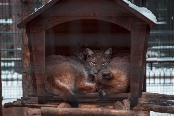Некоторые животные в зоопарке занесены в Красную Книгу