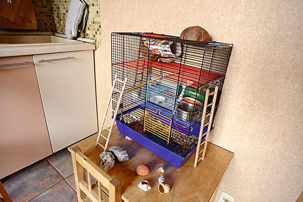 Еще один член семьи — крыса Алиса