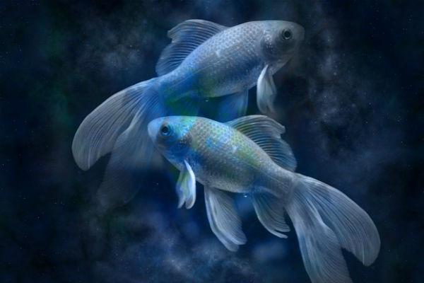 Новый год принесет Рыбам яркие эмоции