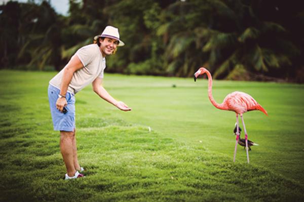 Фламинго?! Живые и розовые