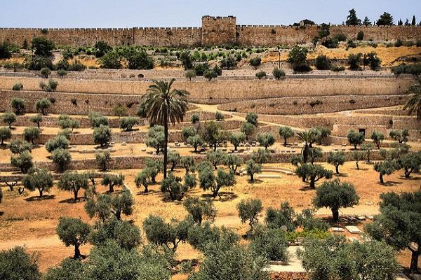 Масличная гора в Иерусалиме