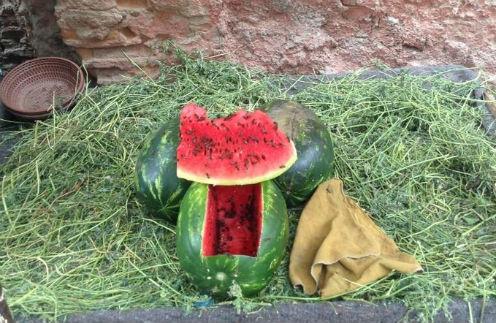В Марокко стартовал сезон арбузов