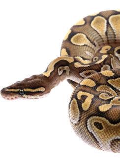 Солист группы «Непара» признается: «У меня были пауки, птицы, рыбы. Но змеи - самые любимые»
