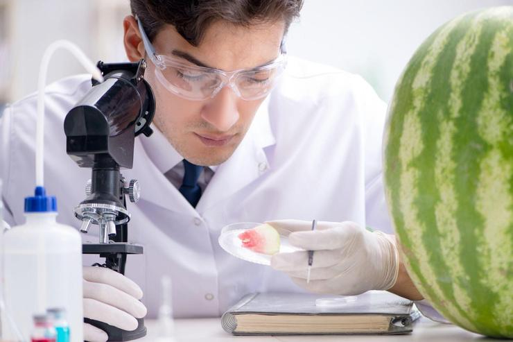 Мог ли арбуз стать причиной смерти, предстоит ответить экспертам