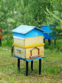 Домики для пчел актер выбирал вместе с папой