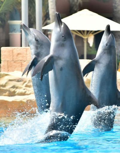 Представление дельфинов