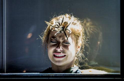 Змеи, пауки и погребение заживо: как испытывают участников «Школы Ревизорро»