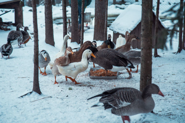 В Зоосаде собраны самые разные птицы