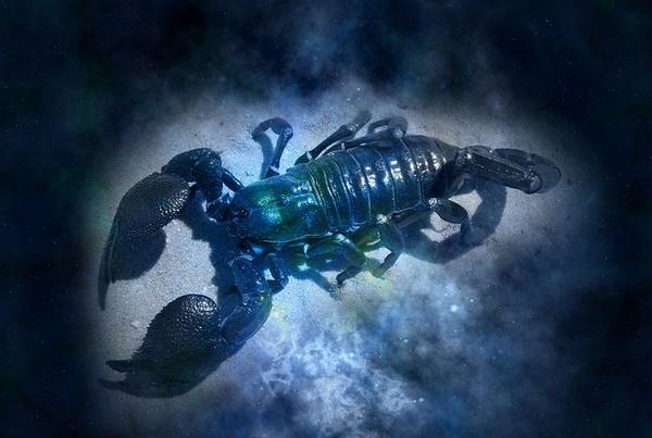 Не злите Скорпиона