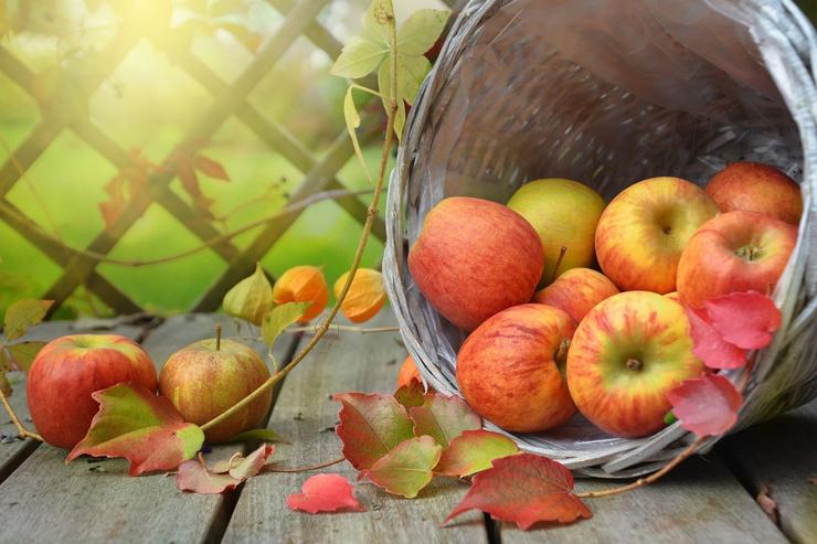 Осень, осень! Гороскоп на октябрь
