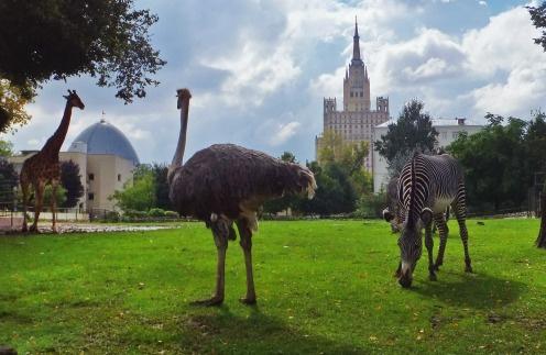 Московский зоопарк приглашает на экскурсию