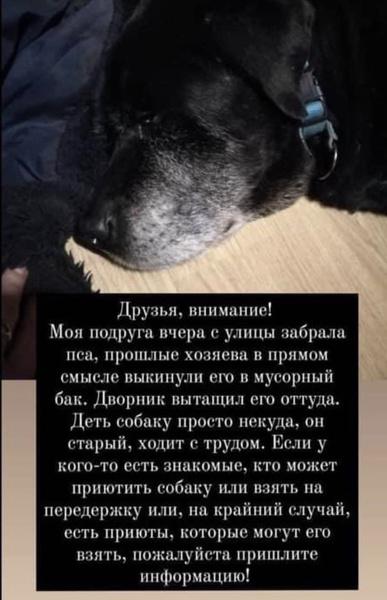 Собаку нашли в мусорном баке