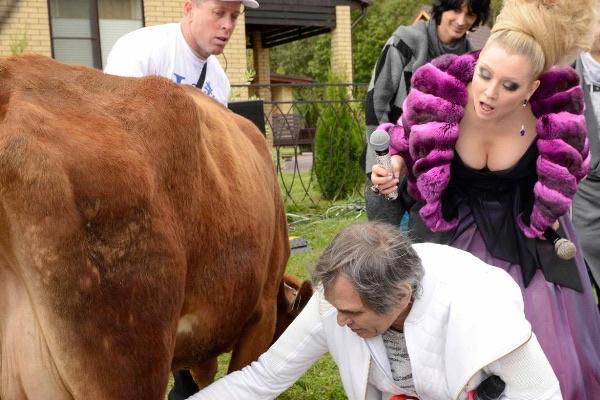 Бари Алибасов впервые доит корову