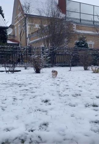 Прилучный уже гуляет с собаками